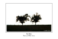 Two Trees - 150 DPI