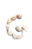 The Seashell Alphabet